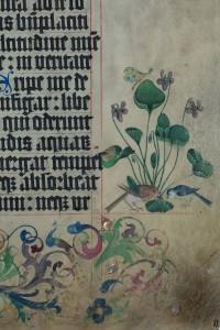 Chorbuch III, Blatt 121r, Detail des Buchschmucks: Rotkehlchen und Blaumeise an einem Veilchenbusch